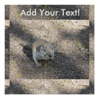 Curious Ground Squirrel Poster