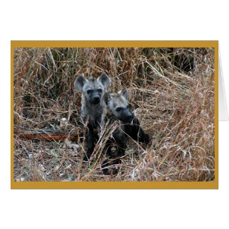 Curious hyena pups. card