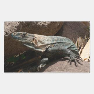 Curious Iguana Sticker