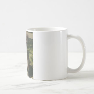 Curious Kangarooo Coffee Mug
