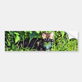 Curious little kitten bumper sticker