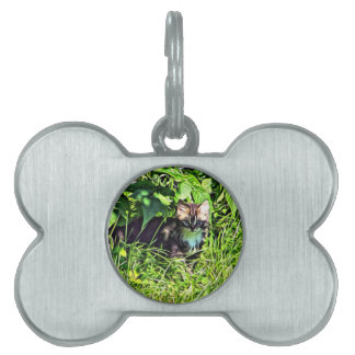 Curious little kitten pet tag