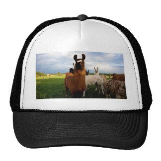 Curious Llama Trucker Hat