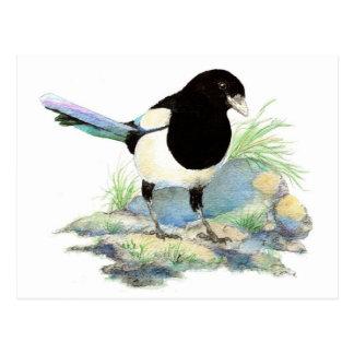 Curious Magpie Postcard