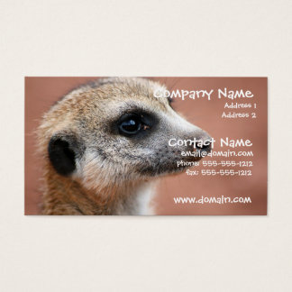 Curious Meerkat Business Card