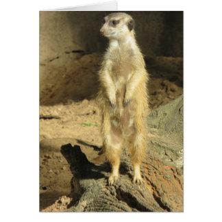 Curious Meerkat Card