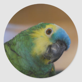 Curious Parrot Classic Round Sticker