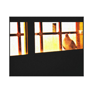 Curious Pigeon Canvas Print