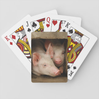 Curious Piglets Playing Cards