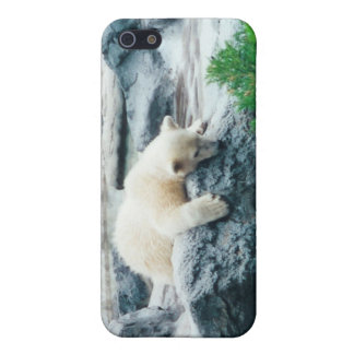 Curious Polar Bear Cub iPhone Case iPhone 5 Case