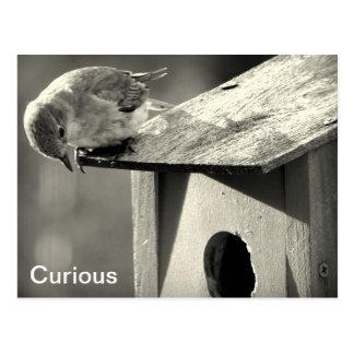 Curious Postcard