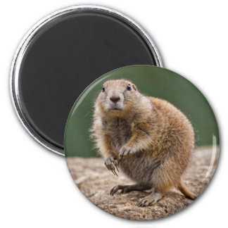 Curious Prairie Dog Magnet