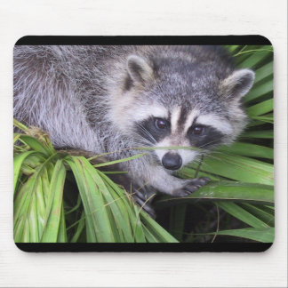 Curious Raccoon Mouse Pad