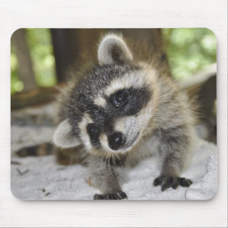 Curious Raccoon - Mousepad