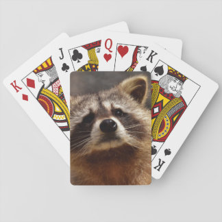 Curious Raccoon Playing Cards