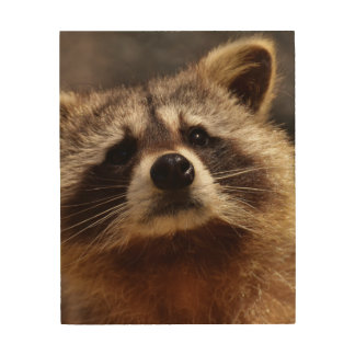 Curious Raccoon Wood Canvases