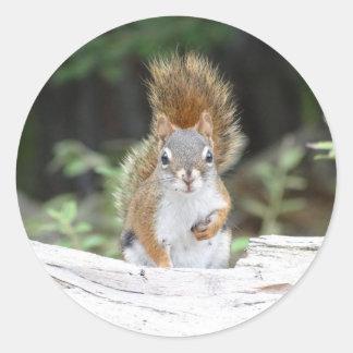 Curious Red Squirrel Round Sticker