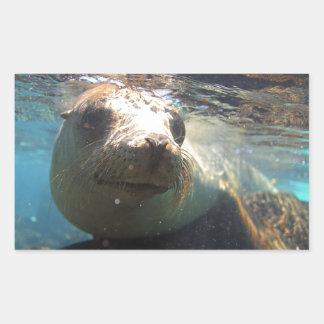 Curious sea lion underwater Galapagos Islands Sticker