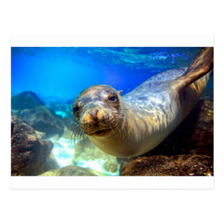 Curious sea lion underwater Galapagos paradise Postcard