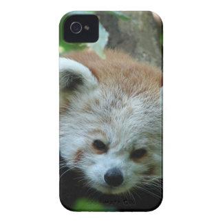 Curious Senior Red Panda iPhone 4 Case-Mate Cases