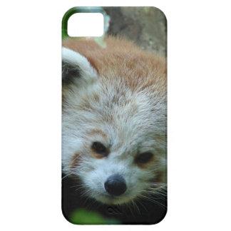 Curious Senior Red Panda iPhone 5 Case