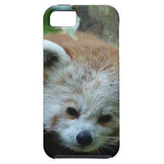 Curious Senior Red Panda iPhone 5 Cover