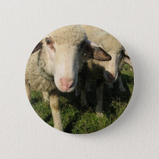 Curious sheep 2 inch round button