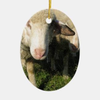 Curious sheep ceramic oval ornament