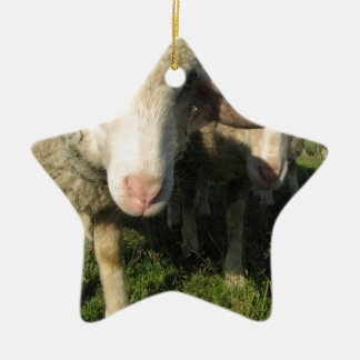 Curious sheep ceramic star ornament