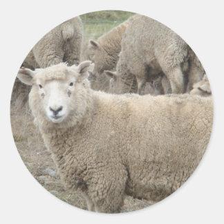 Curious Sheep Classic Round Sticker