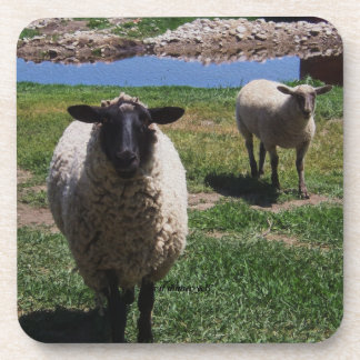 Curious Sheep Coaster
