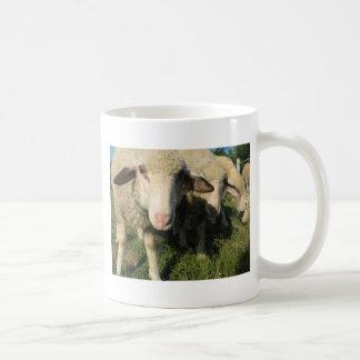 Curious sheep coffee mug