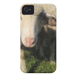 Curious sheep iPhone 4 Case-Mate case