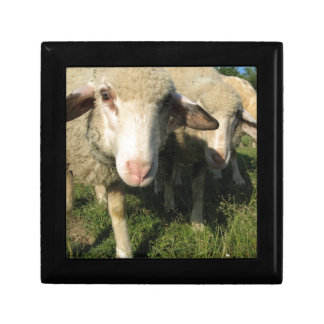 Curious sheep jewelry boxes