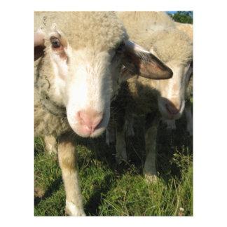 Curious sheep letterhead