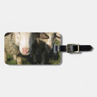 Curious sheep luggage tag