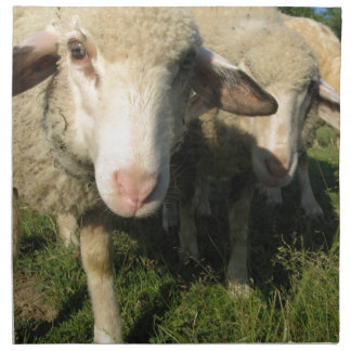Curious sheep napkin