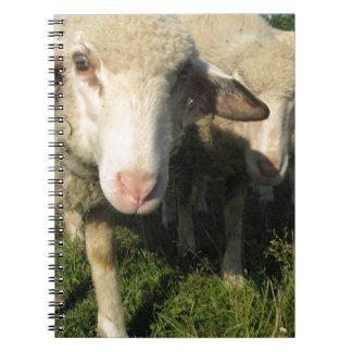 Curious sheep notebook