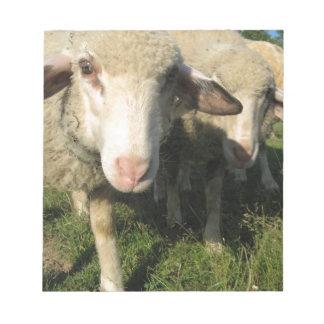 Curious sheep notepads