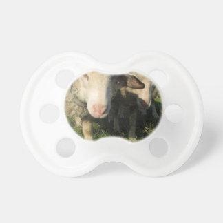 Curious sheep pacifier
