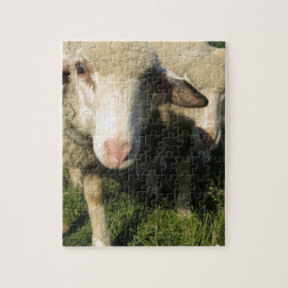 Curious sheep puzzle