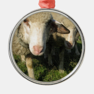 Curious sheep Silver-Colored round ornament