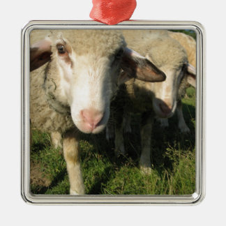 Curious sheep Silver-Colored square ornament
