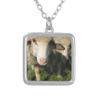 Curious sheep silver plated necklace