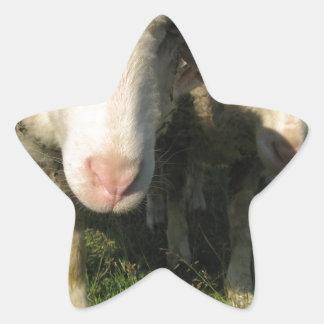 Curious sheep star sticker