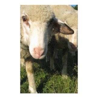 Curious sheep stationery