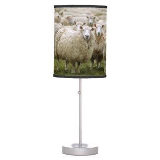 Curious Sheep Table Lamp