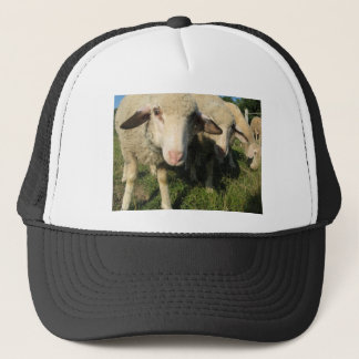 Curious sheep trucker hat