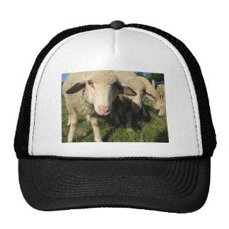 Curious sheep trucker hat