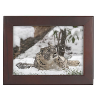 Curious Snow Leopard in Snow Keepsake Box